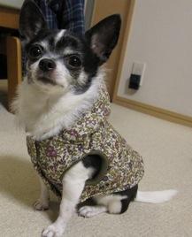 たにリバティ犬服3