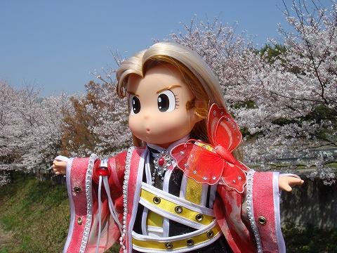 sakura2009-tyou-DSC03901.jpg