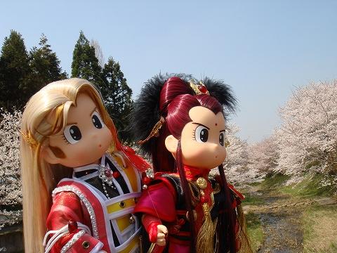 sakura2009-tyougetu-DSC03897.jpg