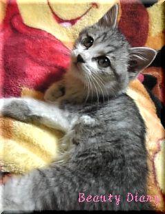 1週間後 子猫