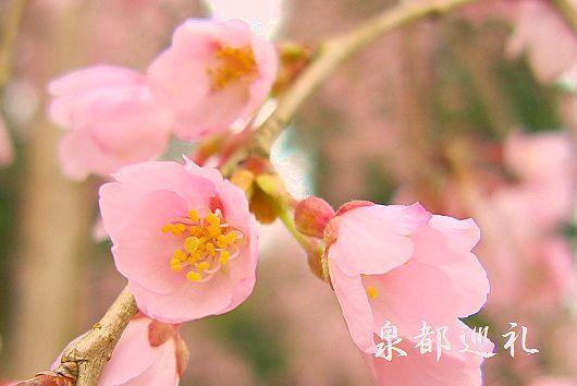 20100314hasami02_20100331223145.jpg