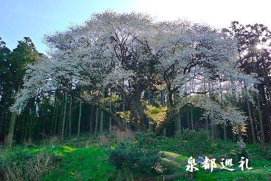 20100327matsukuni01.jpg