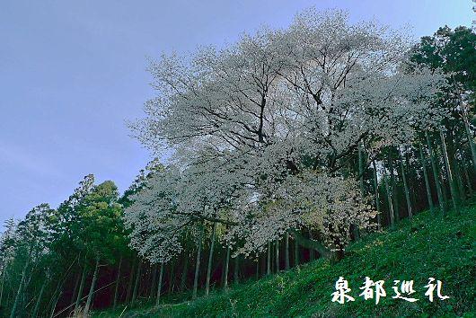 20100327matsukuni02.jpg
