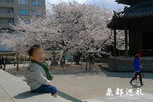 20100328tochoji02.jpg