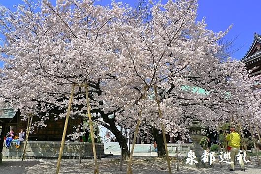20100328tochoji04.jpg