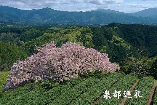20100410toyama04.jpg