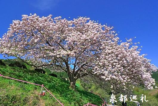 20100410toyama06.jpg