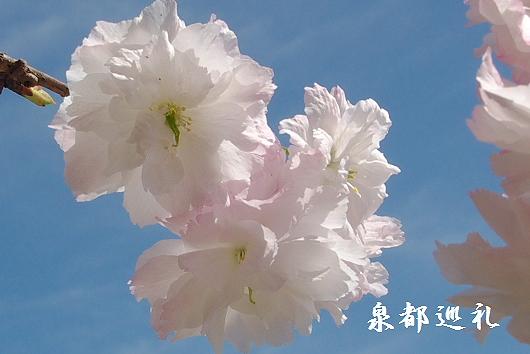 20100410toyama07.jpg