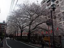 目黒川散歩