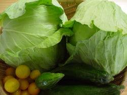 収穫野菜達