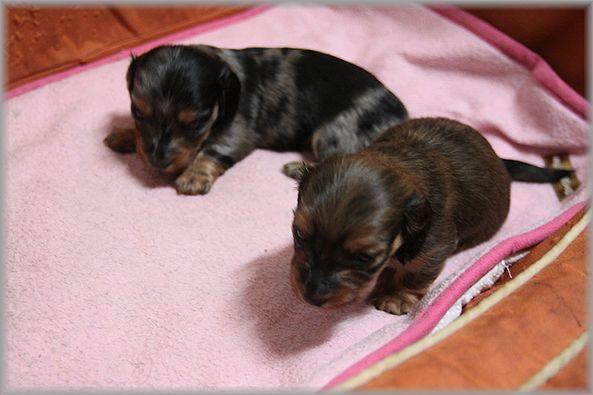 2012.1.22 babys