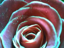 img_flower0022.jpg