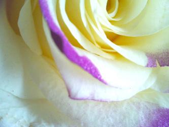 img_flower0053_2.jpg