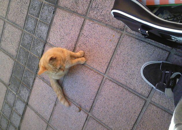 猫るぁああ