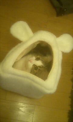 ウサギ小屋かな?
