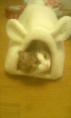 ウサギ耳と猫耳