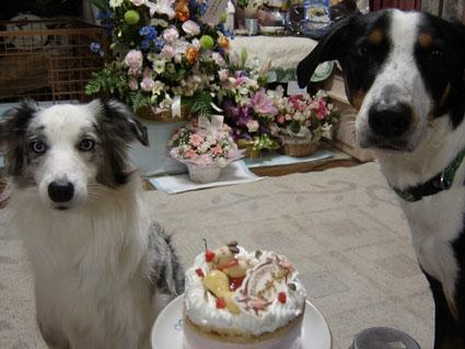 ケーキを前に・・・キラ&ラクス