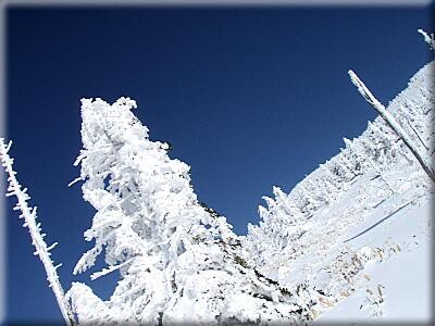 P311樹氷その2