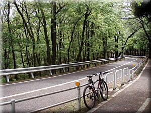P429新緑の自転車道
