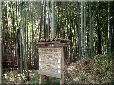 P429トトロの森