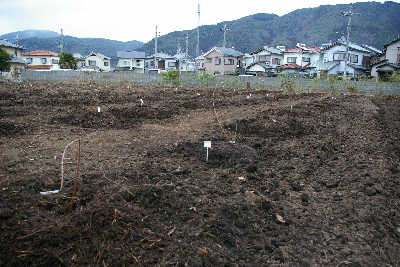 20090311.jpg