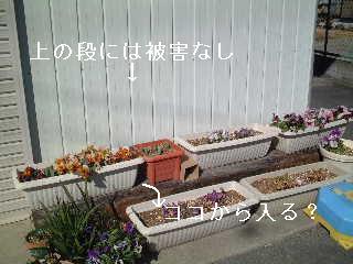 20050221140114.jpg