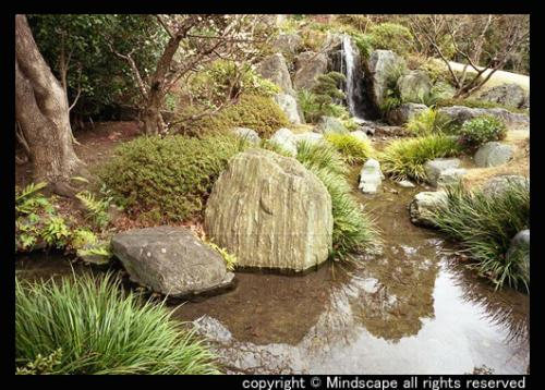 極楽浄土の庭1