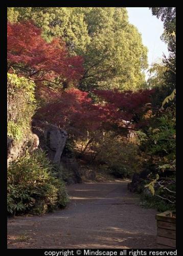 鶴見緑地の紅葉1