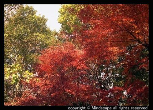 鶴見緑地の紅葉2