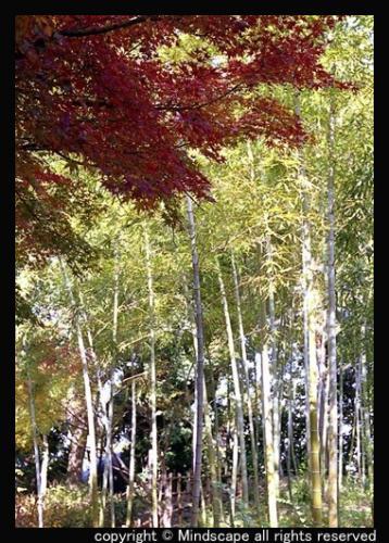鶴見緑地の紅葉3