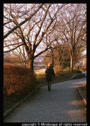 落日の遊歩道