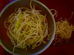 豆もやしのヒゲ根取る