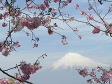 2009岩本山公園