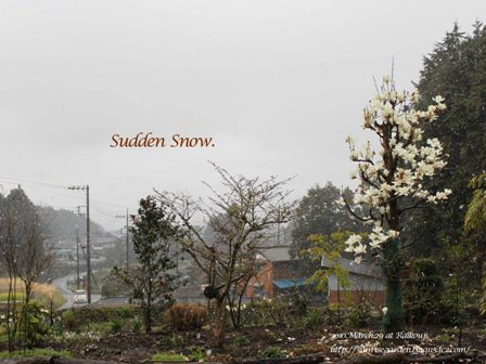 100329_suddensnow_20100330055317.jpg