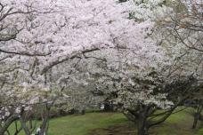 2010岩本山公園