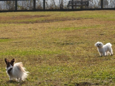 dogsgarden2