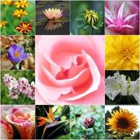 flowers_20090606115630.jpg