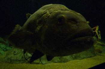 岩みたいな魚。