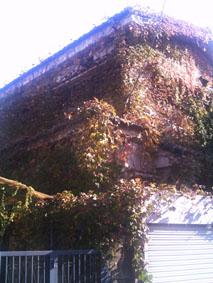 ツタ屋敷2