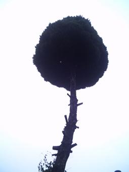 ame4.jpg
