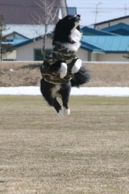 飛んで飛んで