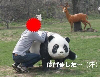 ぱんだがんばれ