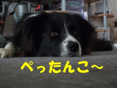 ぺったんこ