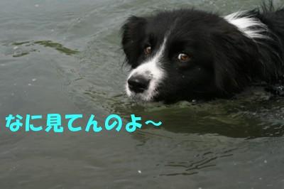 泳ぐ宇宙人