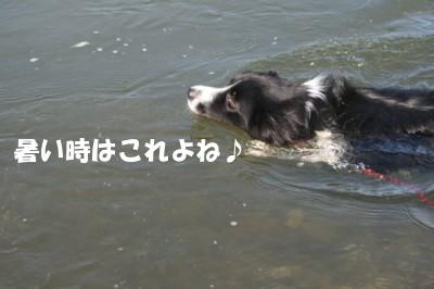 泳げすず嬢