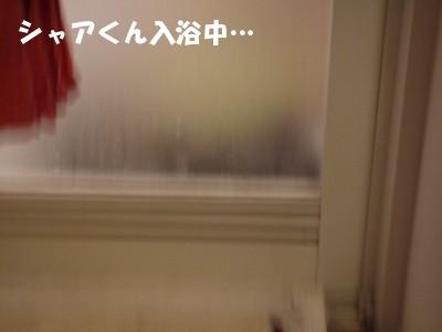 シャアくん入浴中