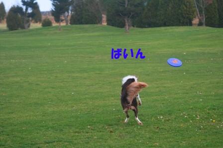 IMG_1841.jpg