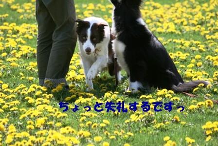 IMG_4141.jpg