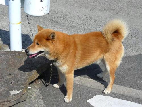 うどん犬2
