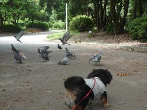 鳩と戯れる空P1050471